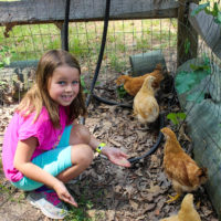 A young girl in a pink shirt smiles as she feeds four brown chickens.