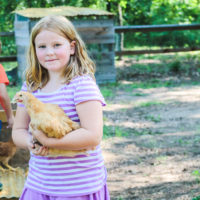 An 8 year old girl smiles for the camera as she nervously holds a chicken.